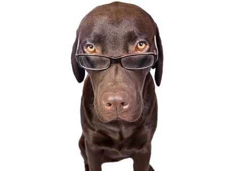 Собаки продаж: такса